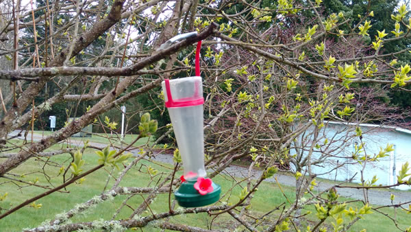 Old Hummingbird Feeder