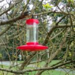 New hummingbird feeder