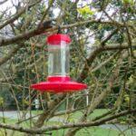 New hummingbird feeder